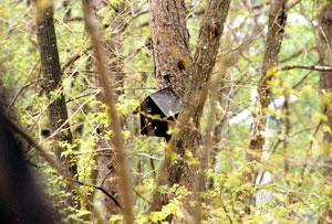丸鋸で作った鳥小屋